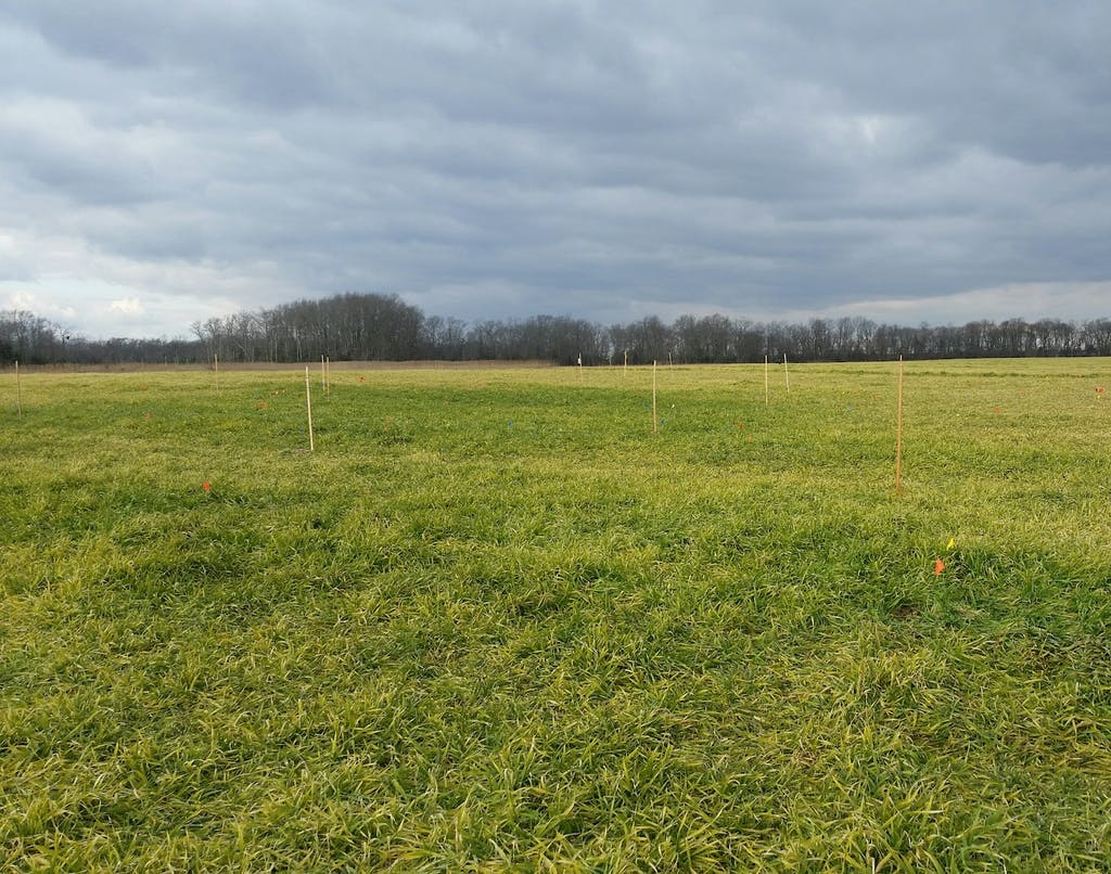 A field is staked out in the search for a burial ground at the John Dickinson Plantatio. (Delaware Division of Historical and Cultural Affairs)