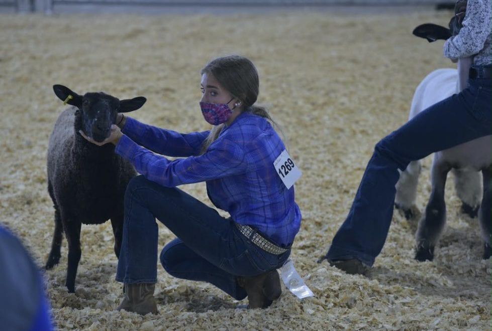 Delaware State Fair livestock competition (Delaware State Fair)