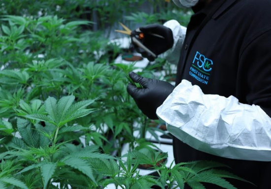 """Featured image for """"Medical marijuana company's fund helps terminally ill pay for products"""""""