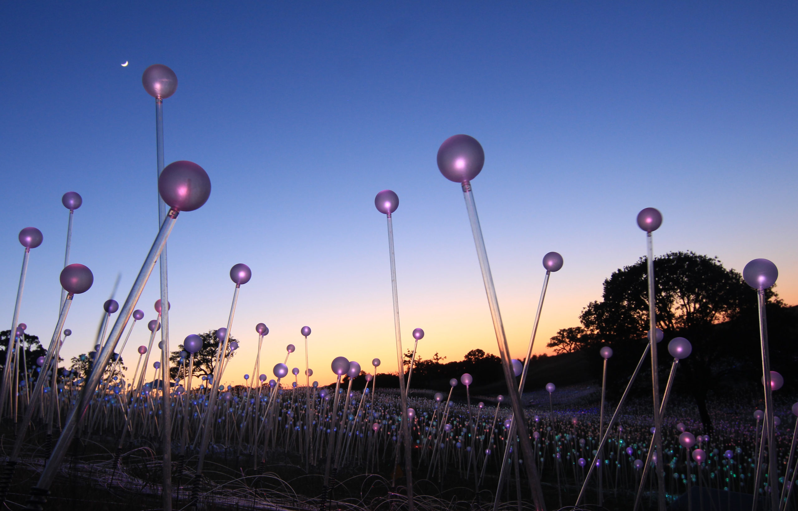 """Featured image for """"In 2022, Longwood will bring back artist who illuminated the grounds"""""""