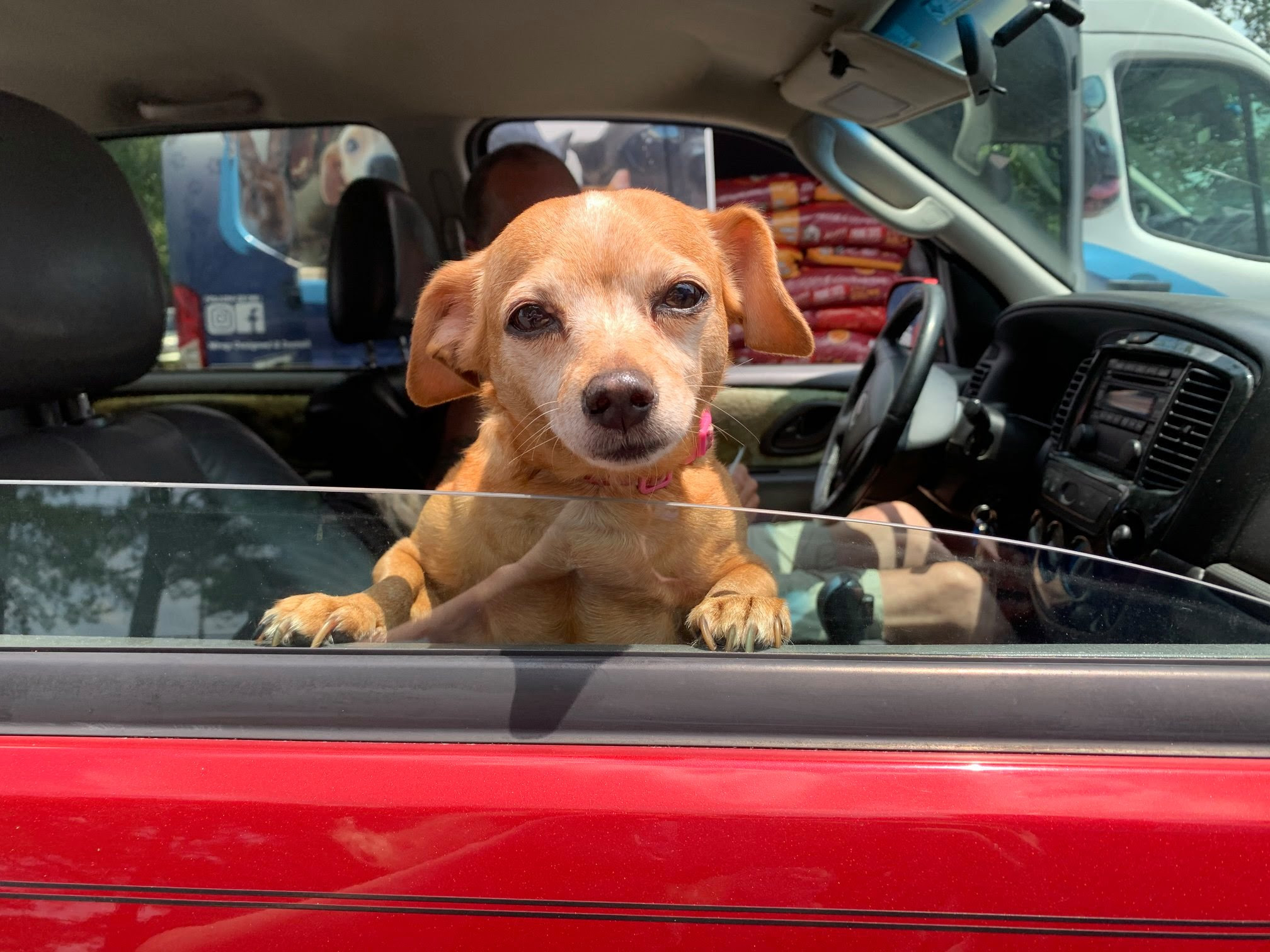 dog in car, faithful friends, pet food bank, first state animal shelter, drive-up pet food bank
